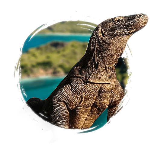komodo-dragon-tours