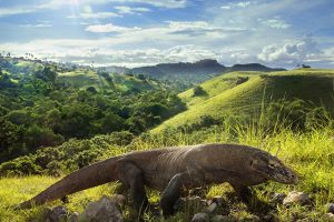 komodo dragon tour from bali